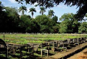 plantation_arbre-300x205